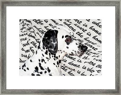 Where The Heart Is Home Where The Heart Is. Kokkie. Dalmation Dog Framed Print by Jenny Rainbow