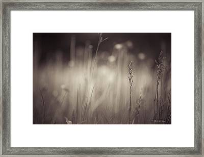 Where The Long Grass Blows Framed Print