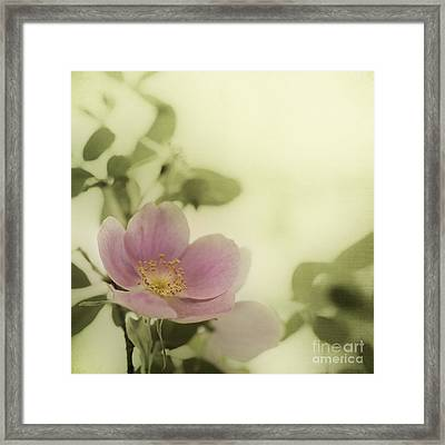 Where The Wild Roses Grow Framed Print