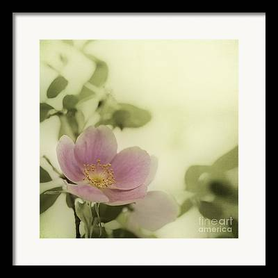 Rosa Acicularis Framed Prints