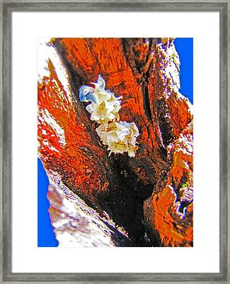 Where They Grow Framed Print by Lenore Senior and Sharon Burger