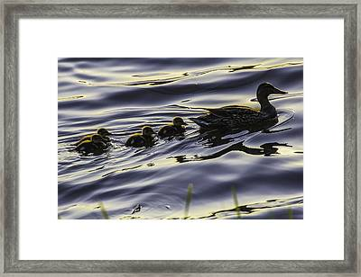 Where We Goin' Ma? Framed Print by Curtis Knight