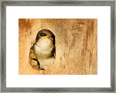 Wheres Dinner Framed Print