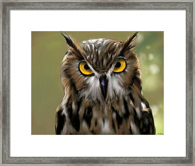 The Gaze Of An Owl - Where's My Dinner?  Framed Print