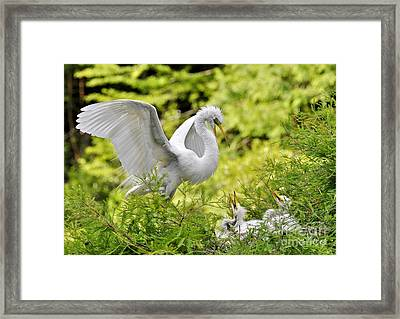 Where's Our Lunch Ma Framed Print