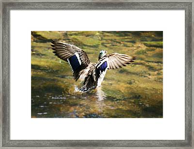 Framed Print featuring the photograph Where's The Breaks by B Wayne Mullins