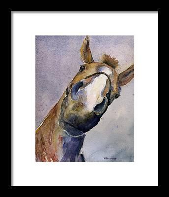 Hanovarian Dressage Horse Framed Prints
