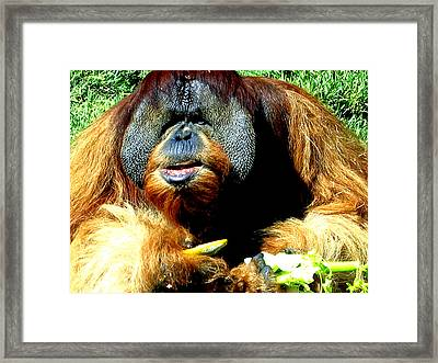 Whi Are  You Calling Fat Framed Print by Jay Milo