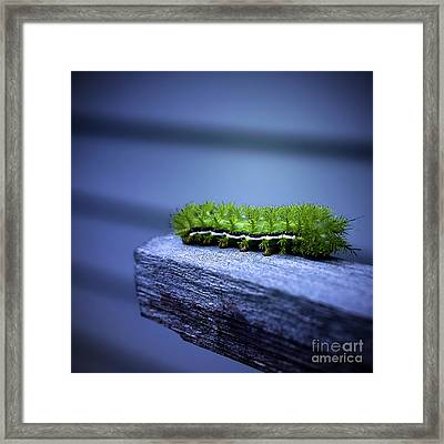Which Way To Go? Framed Print by Trish Mistric