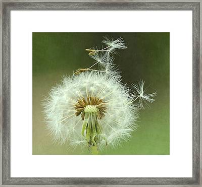 Whimsical 2 Framed Print by Fraida Gutovich