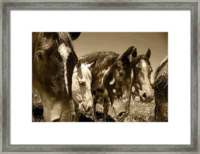 Whimsical Stallions Framed Print