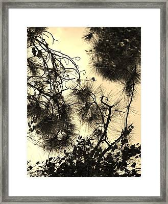 Whimsical Study Framed Print