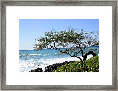 Whimsical Tree Framed Print