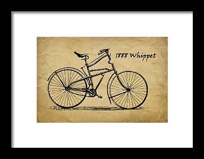 Whippet Framed Prints