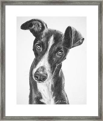 Whippet Black And White Framed Print