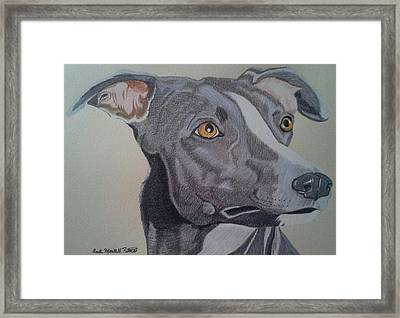 Whippet - Grey And White Framed Print
