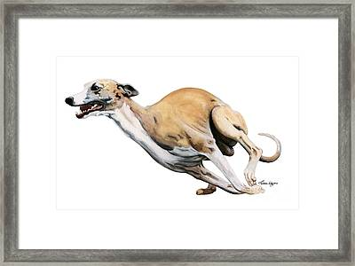 Whippet In The Wind Framed Print by Liane Weyers