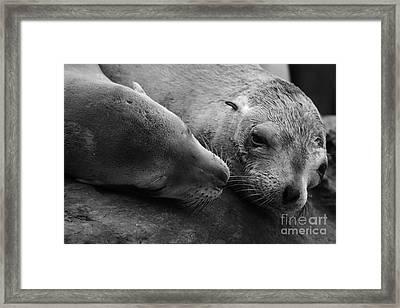 Whisker Love Framed Print