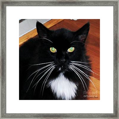 Whiskers Framed Print by Lorraine Louwerse