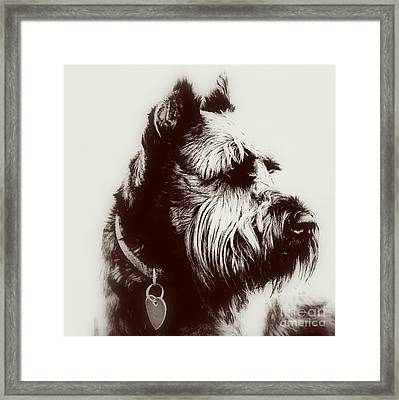 Whiskers Framed Print by Mickey Harkins