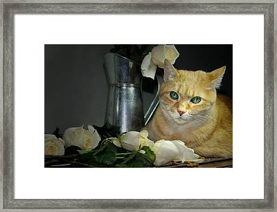 Whiskey And Roses Framed Print