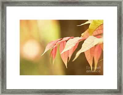 Whisper Framed Print by Andrew Brooks