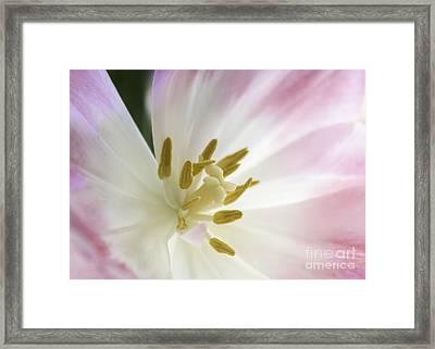Whisper Of Spring Framed Print by Arlene Carmel