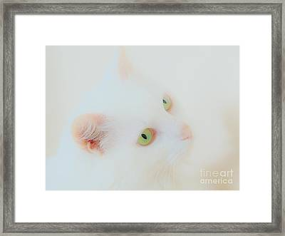 Whisper White Framed Print by Judy Via-Wolff