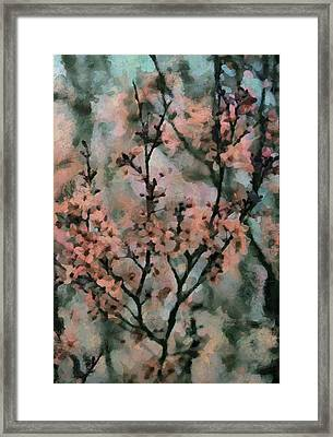 Whispering Cherry Blossoms Framed Print by Janice MacLellan