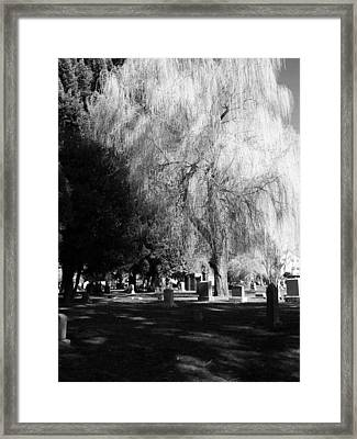 Whispering In The Wind... Framed Print