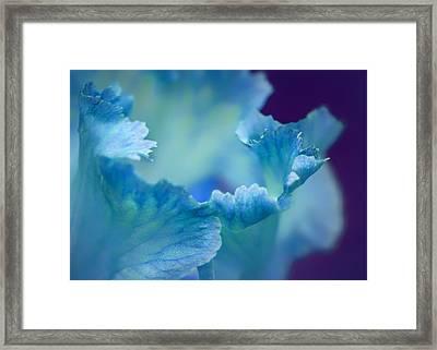 Whispering Framed Print by Nikolyn McDonald