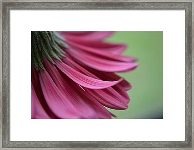 Whispering Petals Framed Print by Melanie Moraga