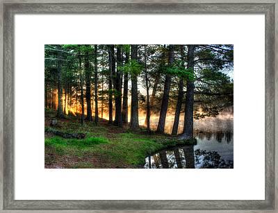 Whispering Pines 2 Framed Print by Brook Burling