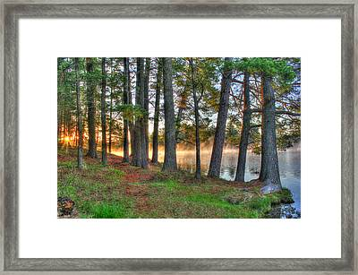 Whispering Pines Framed Print by Brook Burling