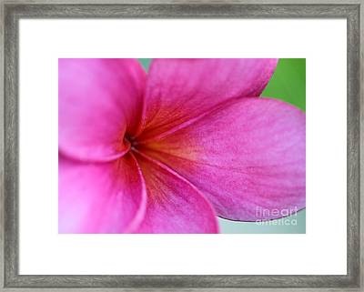 Whispering Pink Plumeria Framed Print by Sabrina L Ryan
