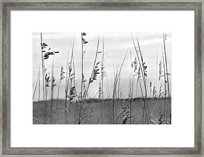 Whispering Sea Oats Bw Framed Print