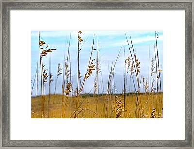 Whispering Sea Oats  Framed Print