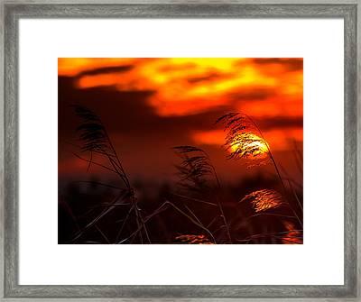 Whispering Sunset Framed Print by Mark Andrew Thomas