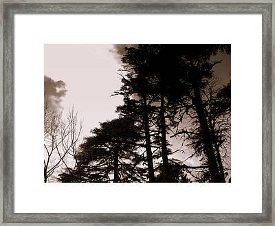 Whispering Trees Framed Print by Salman Ravish