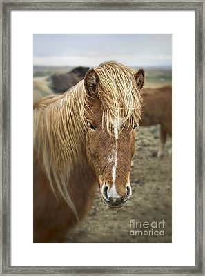 Whispers In The Wind Framed Print by Evelina Kremsdorf