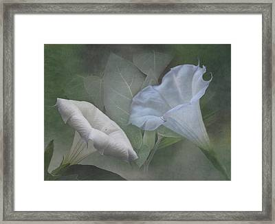 Whispers Of Angel Trumpet Datura Framed Print by Angie Vogel