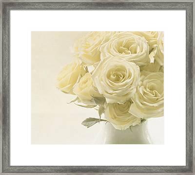 Whispers Of Chiffon - Roses Framed Print by Kim Hojnacki