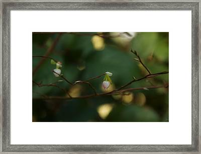 Framed Print featuring the photograph Whispers Of Spring In The Tranquil Forest by Lisa Knechtel