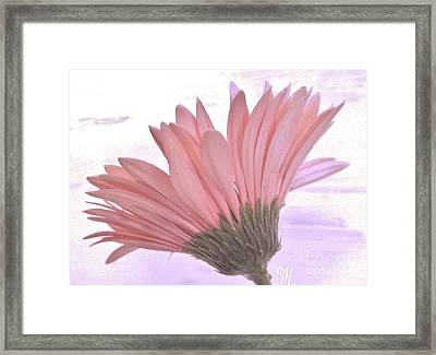 Whispy Daisy Framed Print by Marsha Heiken