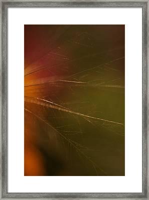 Whispy Framed Print