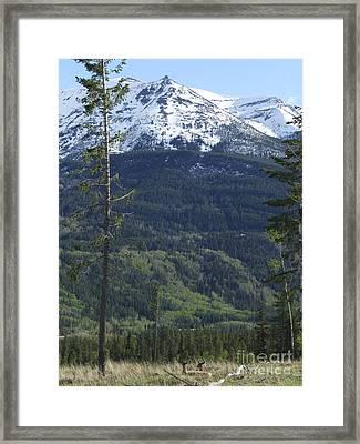 Whistler - Jasper - Canada Framed Print by Phil Banks