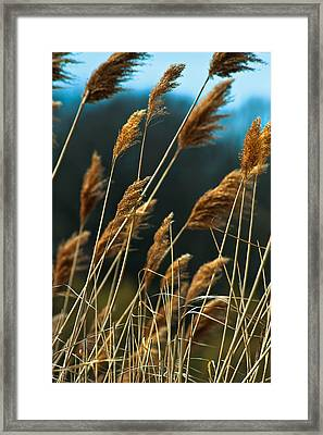 Whistling Wind Framed Print by Mike Feraco