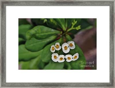 White 8 Framed Print