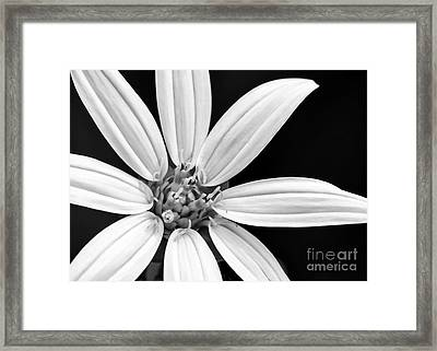White And Black Flower Close Up Framed Print