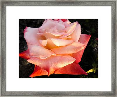 White And Peach Framed Print by Zina Stromberg